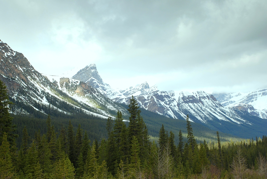 Jasper National Park | Jasper, Alberta | May, 2013