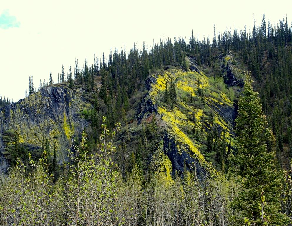 Ogilvie Mts.   Eagle Plains, Yukon Territory   June, 2013