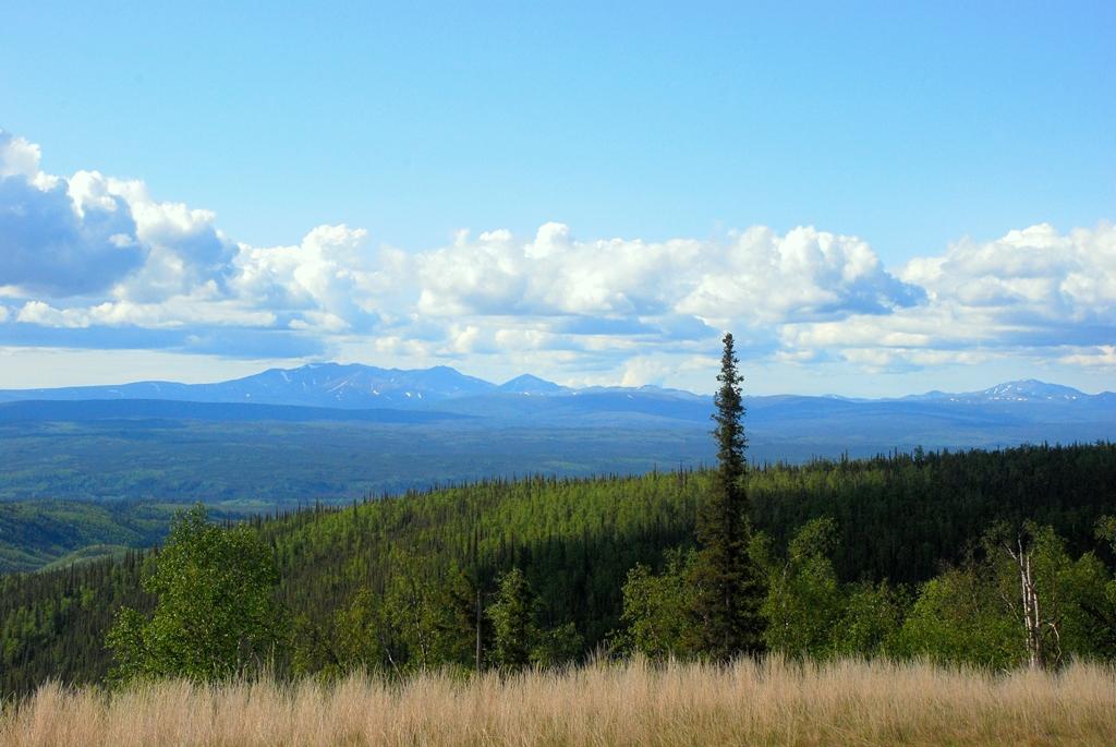Boreal Forest | Livengood, Alaska | June, 2011