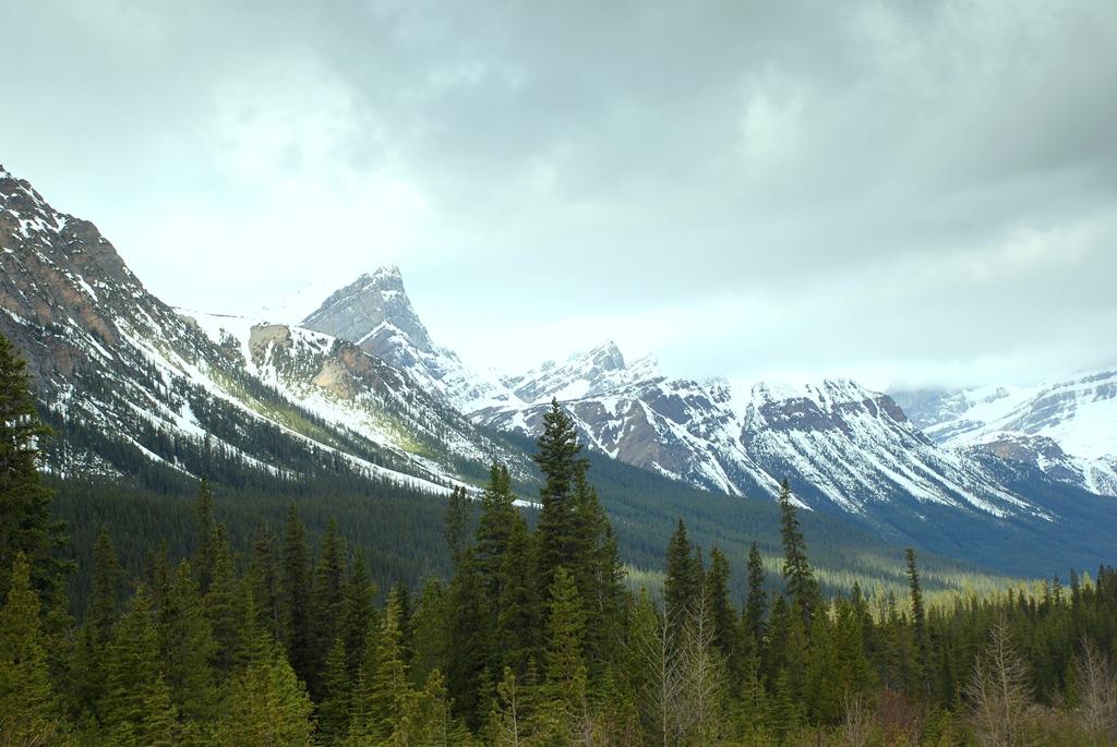 Jasper National Park | Jasper, Alberta | May, 2013